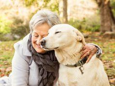 senior pet adoption