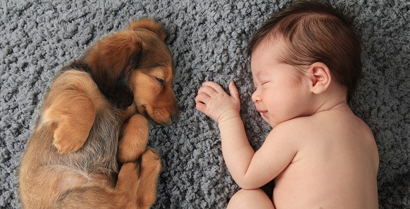 best dogs for babies to grow up with