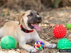 cute dog toys