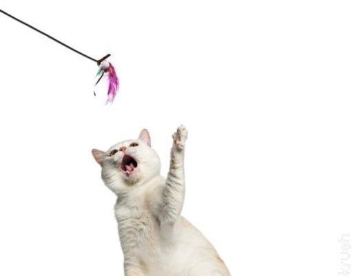 kitty teething toys