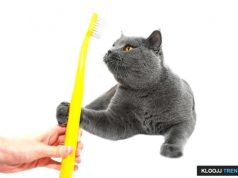 animal dental care and oral surgery