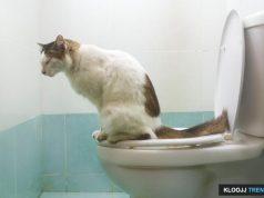 baking soda in cat litter
