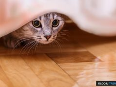 royalty free cat pictures