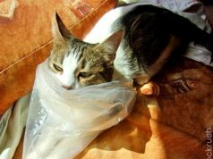 why does my cat eat plastic