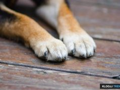 dog dew claw removal price