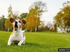 control barking