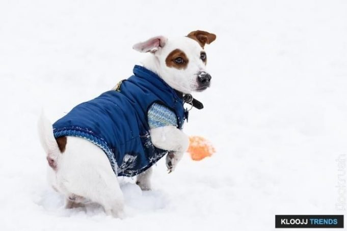 dog jacket with sleeves