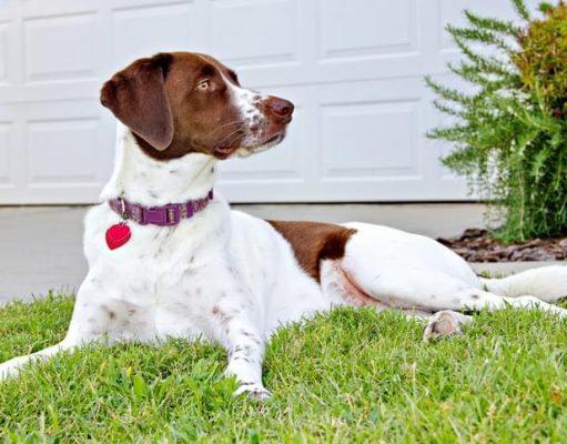 dog identification chip