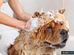 best dog shampoo for skin allergies