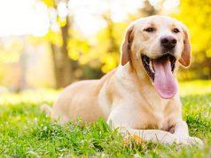 best dog care