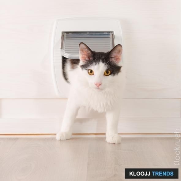 cat flap in double glazing