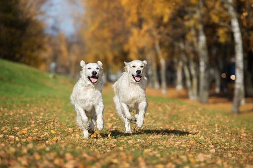 best dual dog leash