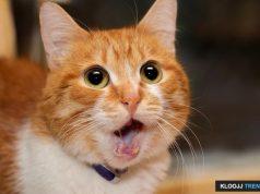 emotional support animal housing