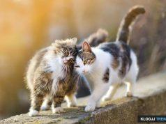 new cat tips