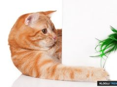 toys for cats to chew on