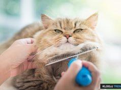 dirty cat litter
