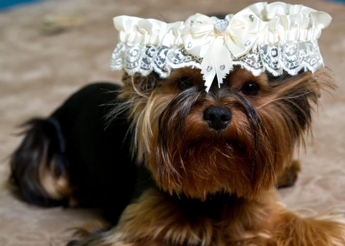 creative ways to include your pooch