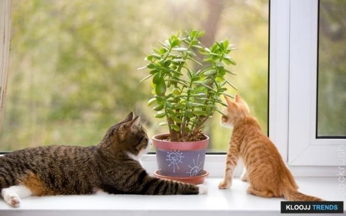 are cats allergic to ferns