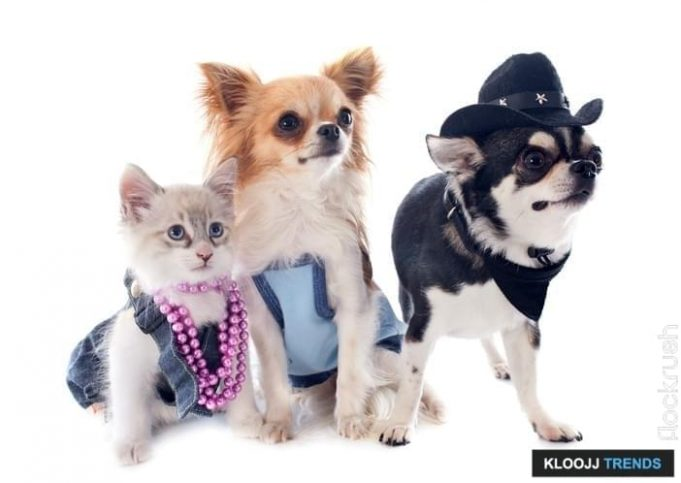 pet sweaters for cats