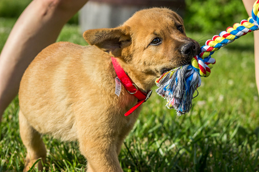 dog toys for active dogs