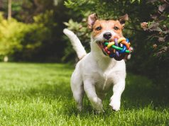 best rope for dog toys