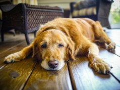 dog old age symptoms