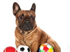 funny dog toys
