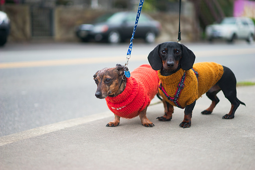 cute puppy sweaters