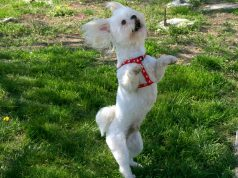 Salsa Dancing Dog